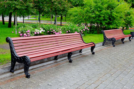 Benches in a city park on a rainy summer day against a lawn background with green grass, flowers and trees Standard-Bild