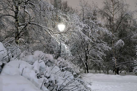 Trees and bushes lit with a streetlight brought by snow. Winter snow evening.