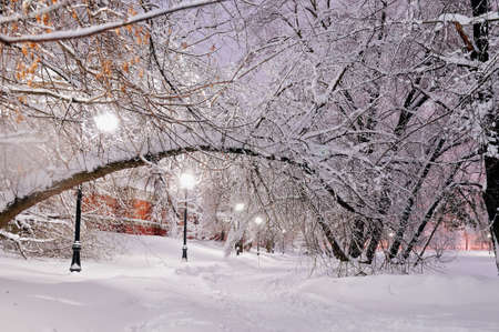 Evening winter scene: a path in the park in snow lit with streetlights, the trees inclined over a path with the snow on branches Standard-Bild