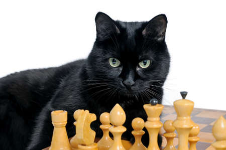 Black cat lying on a chessboard and looking at white chessmen are isolated on a white background