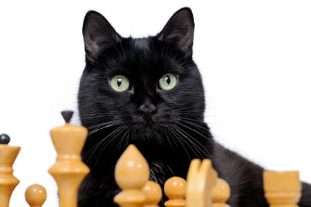 Portrait of a black cat with chess pieces isolated on white background. Black cat and white chessmen. 版權商用圖片 - 106953230