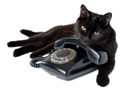 Black cat lying on a black retro phone, looking at the camera. Cat and vintage telephone isolated on white