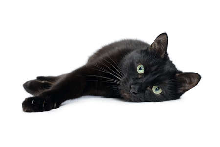 Black cat is lying on its side with its front paws stretched out and looking at the camera