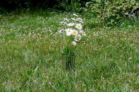 A bouquet of white chamomile flowers, daisy flowers in a glass vase on green grass in the countryside. Stok Fotoğraf