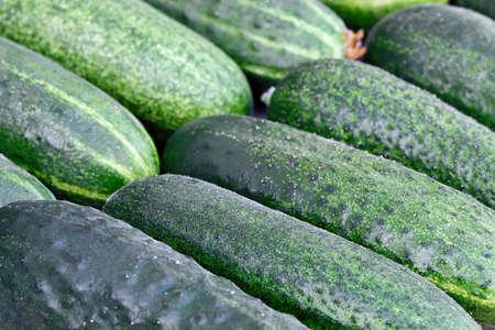 Crop of green cucumbers Stok Fotoğraf