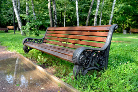 Wooden park bench after the rain against  birches Stok Fotoğraf