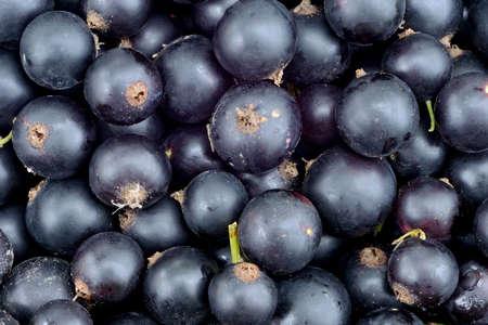 Berries of ripe black currant Stok Fotoğraf