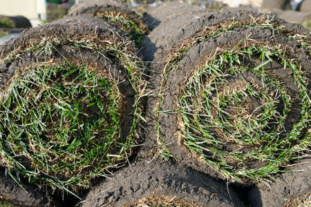 Grass rolls are piled in careless stacks, sod rolls close up 스톡 콘텐츠