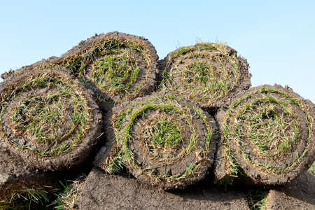 Grass rolls are piled in careless stacks, sod rolls on the blue sky