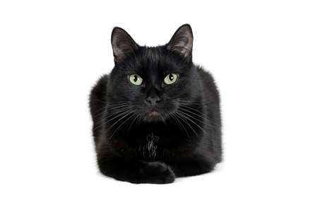 Adorable black cat is lying on a white and looking at the camera. Reklamní fotografie