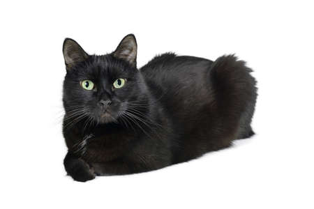 Black cat lies and looks at the camera  isolated on a white background Reklamní fotografie