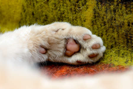 Macro shot of a red cat paw. Paw of a ginger cat on a woolen blanket