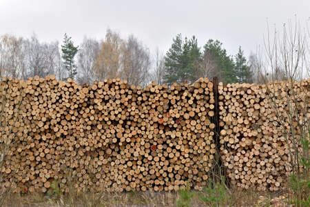 Raw wood logs in a lumber staging. Raw timber stacked. Stacks of logs, stacking of round wood. Timber industry