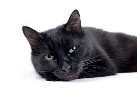 Black cat lying on a white background, looking at camera. Studio macro portrait of young black cat is isolated on white background
