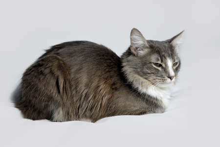 Young fluffy cat of a dark color with stripes on white Standard-Bild - 164230686