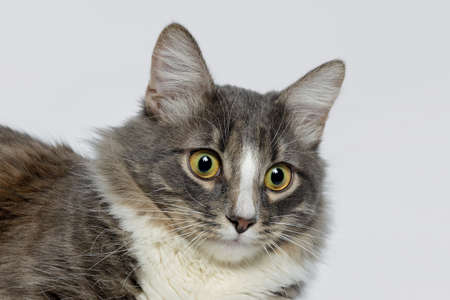 Young fluffy cat of a dark color with stripes on white Standard-Bild - 164230688