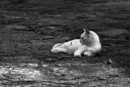 feld: a cat