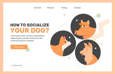Socialization and training of pets.