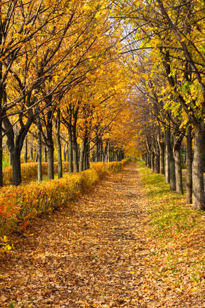 Pathway through the autumn park in sunny day Stock Photo - 16239222