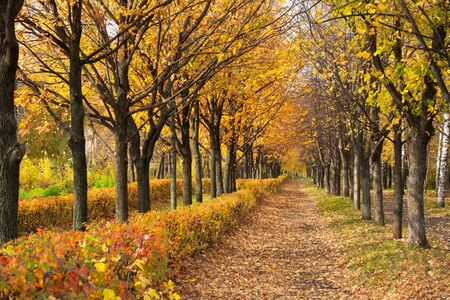 Pathway through the autumn park in sunny day Stock Photo - 16239209
