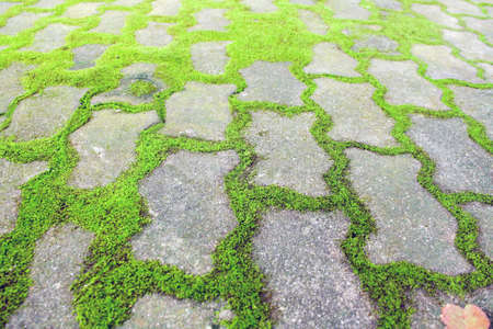 A path or trek grown with moss in between the bricks Stock Photo