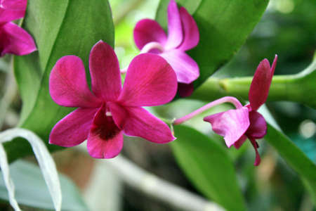Purple orchids in a botanical garden with leaves in the background Stock Photo