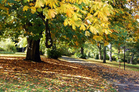 Foreground a tree with leaves turning yellow backgound leaves covering the ground