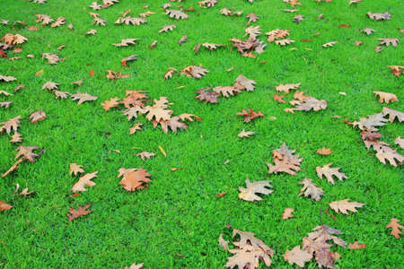 Dry leaves on green grass in a park
