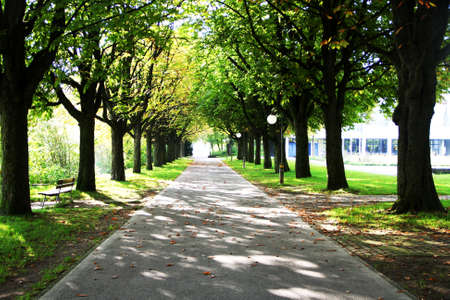 avenues: Trees lined on both side of the road Stock Photo