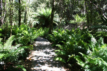 Trail through Fern Glade Walk at Marakoopa Caves, Tasmania