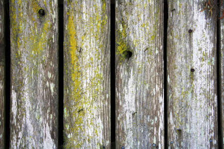 Old wooden fence with moss Stock Photo - 14731941