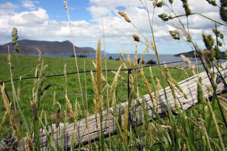 Weeds are fenced out Stock Photo - 16387188