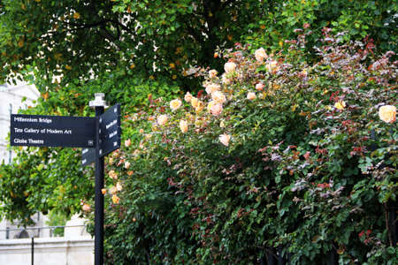 globe theatre: Street sign in London city beside with roses blooming at the side Stock Photo
