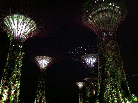 Supertrees grove at night Singapore  Stock Photo