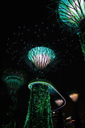Beautiful supertrees lighted up in green lights