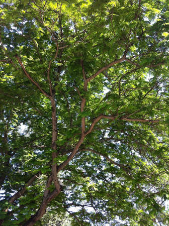 View of tree and branches with pretty shades of green from bottom