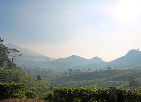Tea plantation on mountainside of Garut, Indonesia at daybreak with mountains in the background and mist in the air