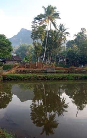 Reflection of mountains and coconut palm trees in pond in Kampung Campaka, Garut, Indonesia