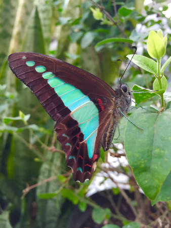 Beautiful blue and black with red spots colored butterfly perched on a plant Stock Photo