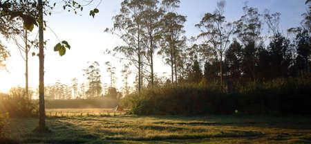 Camping at dawn