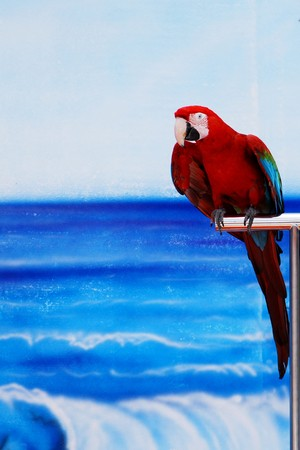 picture of a parrot on a stand photo
