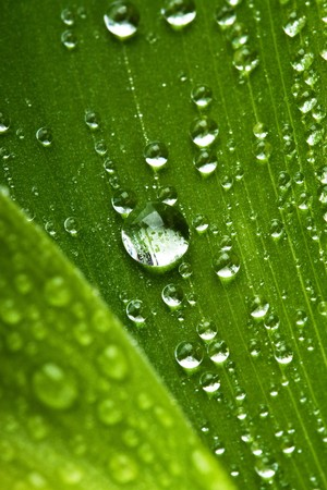 macro picture of water drops on fresh green leaf photo