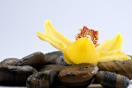 therapy stones with yellow orchid flower with water drops on  photo