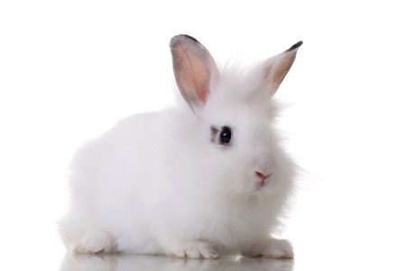 white tail: picture of a little rabbit standing on white background Stock Photo