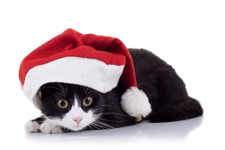 closeup picture of a cute black and white cat wearing a christmas hat photo