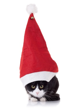 closeup picture of a cute black and white cat wearing a huge christmas hat Stock Photo - 8043225