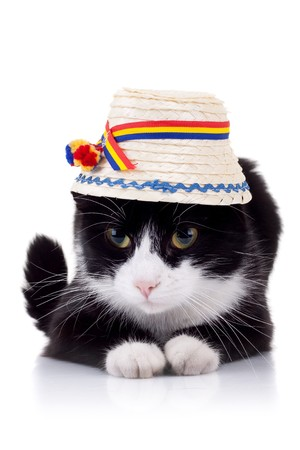 romanian: cute black and white cat wearing a traditional romanian hat