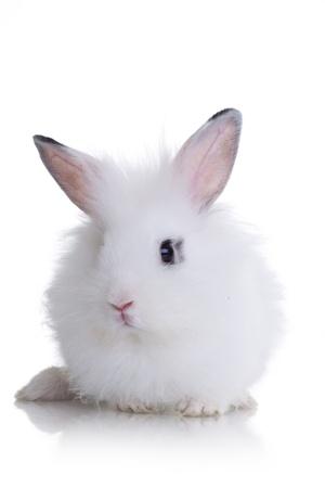 Little white rabbit. Isolated on white background  photo