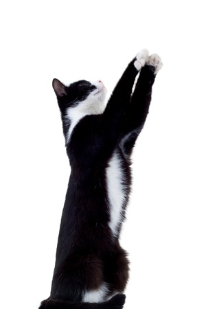 attention grabbing: Cat reaching out for a toy out of the frame. You can easily insert the desired toy or any other object