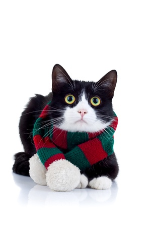 cat wearing a red and green scarf at its neck over white  Stock Photo - 8709465